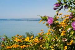 De zomerbloem bij meer Stock Afbeeldingen