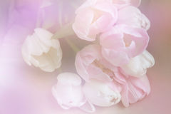De zomerbloem: chrysant op witte achtergrond wordt geïsoleerd die Royalty-vrije Stock Foto