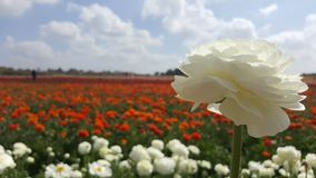 De zomerbloem in ingediend op een zonnige dag Stock Afbeelding