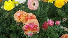 De zomerbloem in ingediend op een zonnige dag Royalty-vrije Stock Afbeeldingen