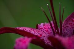 De zomerbloem in regendruppels royalty-vrije stock fotografie