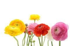 De zomerbloemen Royalty-vrije Stock Foto's
