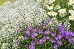 De zomerbloemen, aardachtergrond stock foto's
