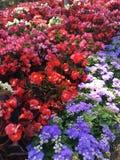 De zomerbloemen bij villa Rufolo in Ravello, Italië stock afbeelding