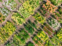 De zomerbloemen die op het gebied groeien Hommelfoto Royalty-vrije Stock Afbeelding