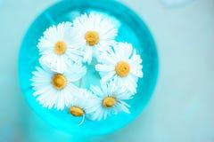 De zomerbloemen in een vaas op een blauwe achtergrond Binnenlands decor royalty-vrije stock foto