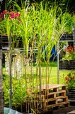 De zomerbloemen en Kruiden in Potten De zomerbloemen en kruiden in plastic potten op rekken stock afbeeldingen