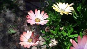 De zomerbloemen en mooie kleuren Royalty-vrije Stock Foto's