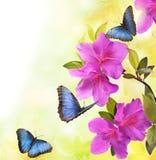 De zomerbloemen en vlinders Stock Afbeelding