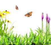 De zomerbloemen, groen bladeren en insect royalty-vrije stock foto