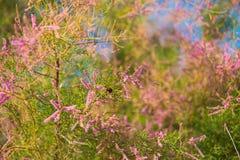 De zomerbloemen met een bij, buckground, Erica Stock Afbeelding