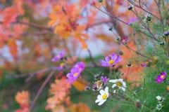 De zomerbloemen op een mooie de herfst vage achtergrond Stock Afbeelding