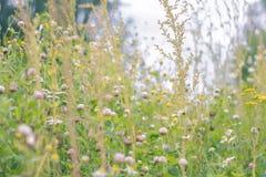 De zomerbloemen op een weide Zachte Achtergrond Stock Afbeelding