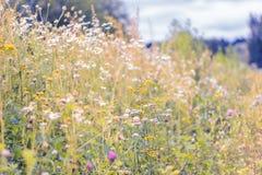 De zomerbloemen op een weide Zachte Achtergrond Royalty-vrije Stock Afbeelding