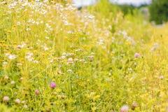 De zomerbloemen op een weide Zachte Achtergrond Stock Afbeeldingen