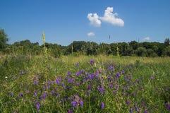 De zomerbloemen op het gebied Stock Afbeeldingen