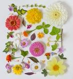 De zomerbloemen op witte achtergrond Stock Fotografie