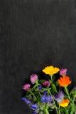 De zomerbloemen over donkere raad Royalty-vrije Stock Afbeeldingen