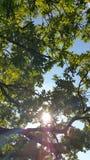 De zomerbomen Stock Foto's