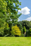 De zomerbomen Royalty-vrije Stock Afbeelding