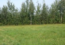 De zomerbomen stock foto