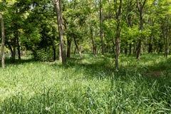 De zomerbomen in het park royalty-vrije stock fotografie