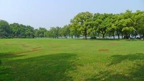 De zomerbomen met weide Stock Foto's