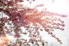 De zomerboom Stock Fotografie