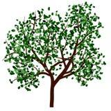De zomerboom Royalty-vrije Stock Afbeelding