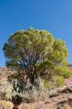 De zomerboom Royalty-vrije Stock Afbeeldingen