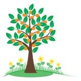 De zomerboom met oranje vruchten Royalty-vrije Stock Afbeeldingen