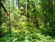 De zomerbos in het geheel van groen en schoonheid Royalty-vrije Stock Foto's
