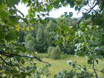 De zomerbos in het geheel van groen en schoonheid Stock Fotografie