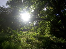 De zomerbos in Kiev Stock Foto's