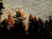 De zomerbrandwond, gouden bomen Royalty-vrije Stock Afbeeldingen