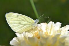 De zomerdag en vlinder op de bloem Stock Afbeelding