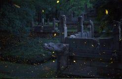 De zomerelf - Glimwormen royalty-vrije stock foto