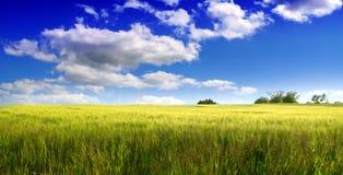 De zomergebied en witte wolken. Stock Foto