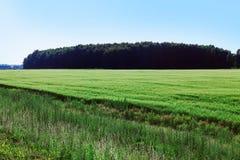 De zomergebied van gras Royalty-vrije Stock Foto