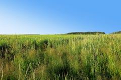 De zomergebied van gras Stock Foto's