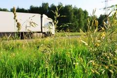 De zomergebied van gras Stock Fotografie