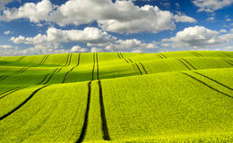 De zomergebieden, de rijpende gebieden van het korrelgewas stock fotografie