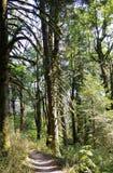 De zomergebladerte, Eagle Creek, de Kloof van Colombia, Oregon royalty-vrije stock afbeelding