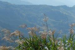 De zomerheuvel Stock Afbeeldingen