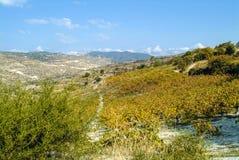 De de zomerhitte brandt het landschap in centraal Cyprus royalty-vrije stock afbeelding