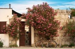 De zomerhitte in klein dorp op een Kroatisch eiland, oleanders op oude steenmuren stock afbeeldingen