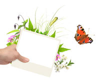 De zomerkader met foto, groene bladeren, bloemen en insecten Royalty-vrije Stock Foto