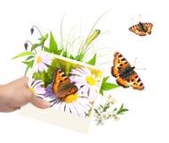 De zomerkader met foto, groene bladeren, bloemen en insecten Stock Fotografie