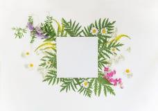 De zomerkader met verschillende kruiden en bloemen Royalty-vrije Stock Foto
