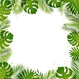 De zomerkader van palmbladen Tropische installaties Vector illustratie stock illustratie